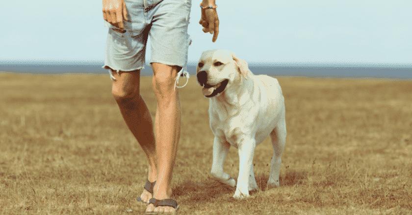 apprendre à marcher avec son chien avec ou bien sans laisse facilement
