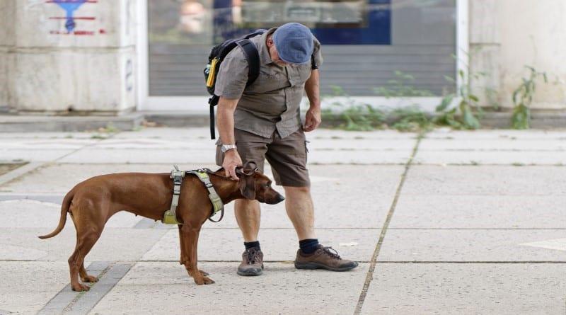 Comment bien dresser son chien rapidement soi-même