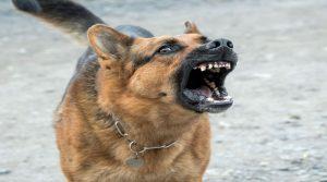 Aboiement chien, pourquoi votre chien aboie-t-il ?