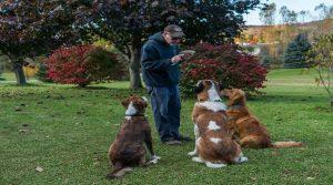 Dressage chien à domicile, Pourquoi faire ?