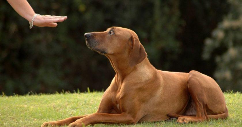 apprendre coucher à son chien facilement sans crier