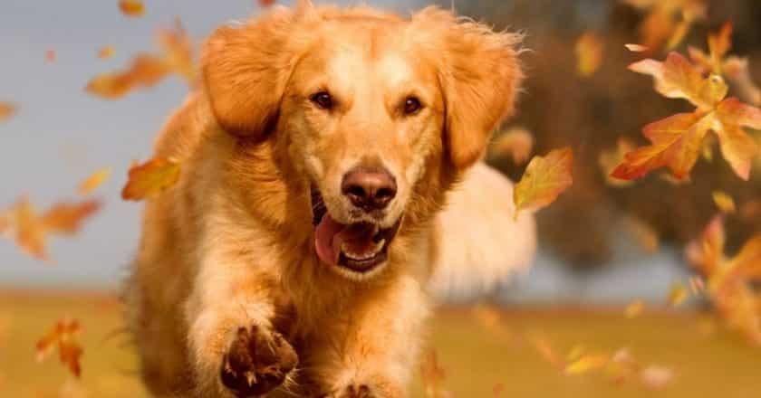 « Rappel chien » : apprenez le rappel parfait facilement