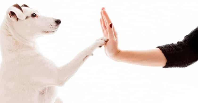 Éduquer son chien facilement et sans perte de temps !