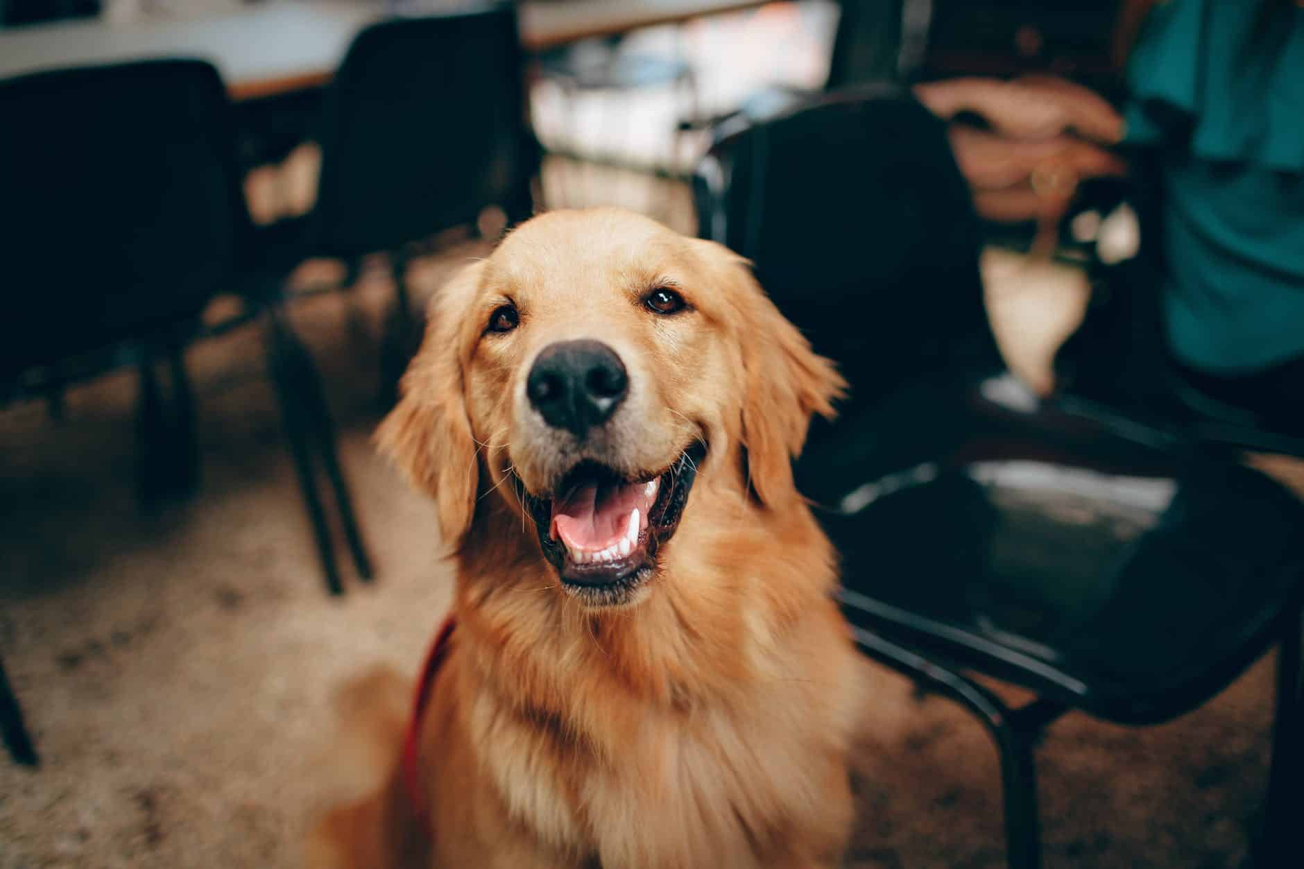 Il est important qu'entre le maître comprenne le langage de son chien. Éduquer son chien c'est aussi connaître ses habitudes.