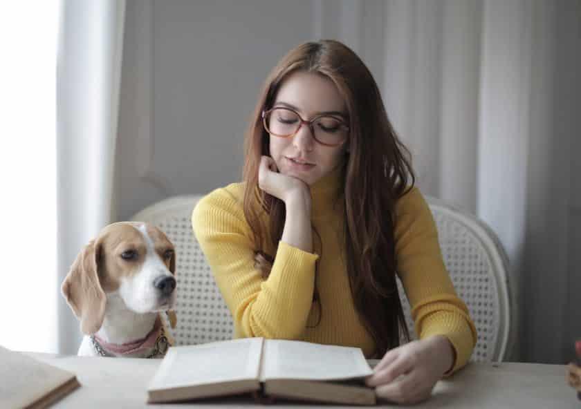 Éduquer son chien facilement demande de l'assiduité.