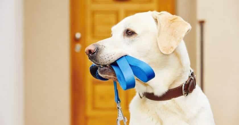 Comment apprendre à laisser son chien seul pendant une durée indéterminée ?