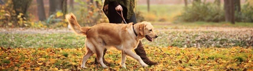 Pour respecter les besoins vitaux de votre jeune chien adulte ou de votre chiot, il faudra prendre en considération ses besoins, c'est-à-dire promener votre chien régulièrement, jouer avec votre fidèle ami, faire des rencontres entre canidés. Pour apprendre à laisser son chien seul, il est important pour lui qu'il ait un environnement sain et que son espace social soit respecté.