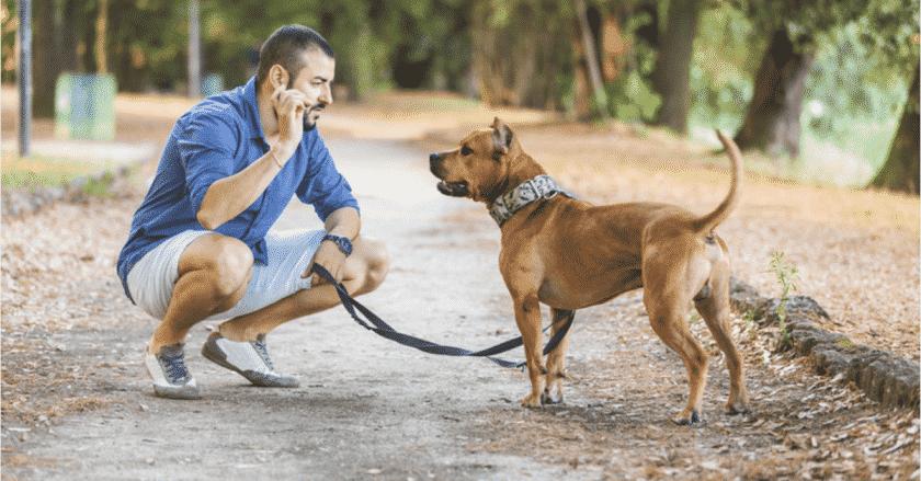 Comment promener son chien facilement sans crier