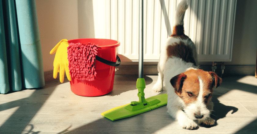 Il est important de savoir comment éduquer son chiot propre. Votre toutou n'apprendra pas la propreté seul dans son coin.