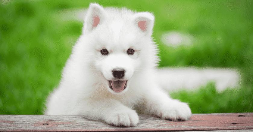 3 conseils pour éduquer son chien simplement et facilement