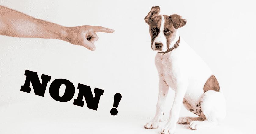 Dire non à son chien est important, mais les maîtres ont peur de punir en pensant qu'ils font mal de le faire. Pourtant, votre toutou a besoin d'être encadré par son plus fidèle maître.