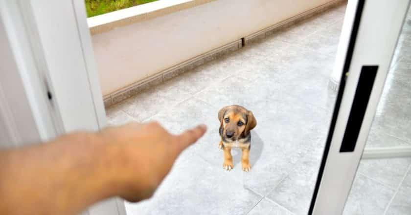 Comment punir son chien ? Il est important de savoir punir son compagnon facilement lorsqu'il fait des bêtises. Apprenez à le faire en 5 méthodes incroyable !