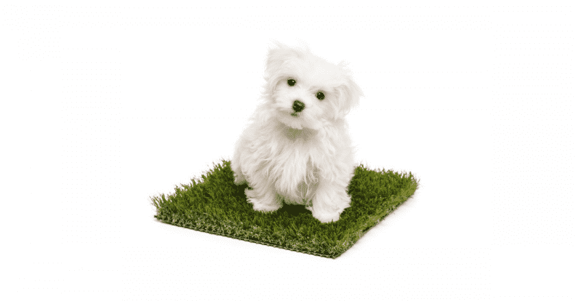 Comment apprendre à son chien à faire ses besoins au même endroit? Il est clair qu'un chien qui sait où faire ses petits besoins c'est agréable et très surprenant ! Apprenez à votre tout à aller au petit coin comme un vrai chef !
