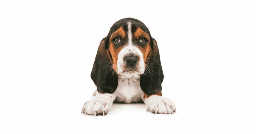 Éducation canine méthode positive : est-ce qu'il y a une limite ? Faut-il stopper l'apprentissage par la positivité ou bien au contraire intensifier ?