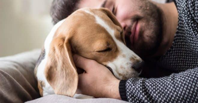 Dresser votre chien, je vous dis tout sur l'importance de le faire et pourquoi il vous rendra meilleur !
