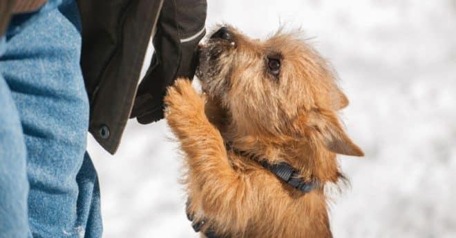 Apprendre à son chien à ne pas sauter sur les gens.