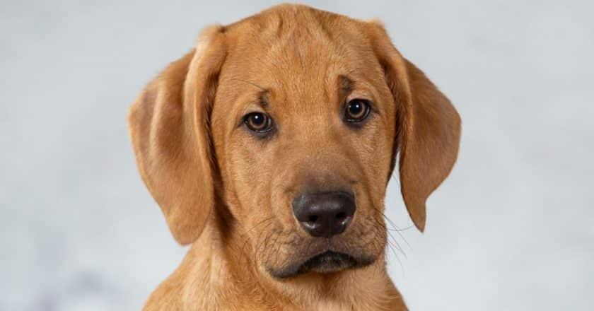 Apprendre son nom à un chiot est important pour la suite des événements si vous voulez bien éduquer votre animal à quatre pattes