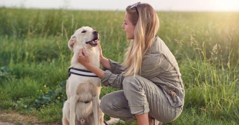 Dresser son chien avec 5 méthodes positives qui vous aidera énormément !
