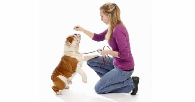 Éducation pour chien, de quoi il s'agit exactement ? Venez découvrir cette méthode formidable qui vous apprendra à mieux comprendre maintenant !