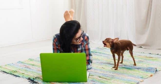 Comment faire taire un chien qui aboie fort! Apprenez à votre animal de compagnie à se taire !