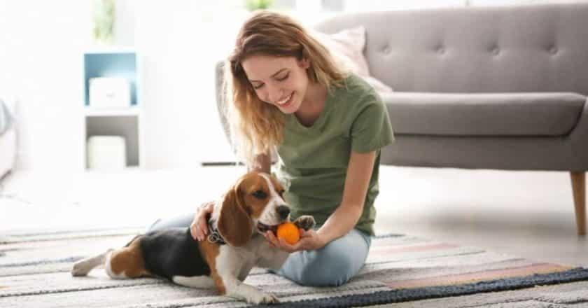 Apprendre à donner à son chien va vous permettre de jouer pendant des heureuses avec votre animal de compagnie ! Alors êtes-vous prêt à passer des heures de bonheur avec votre compagnon à quatre pattes ?