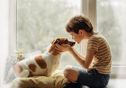 Vous devez mettre des solutions en place pour dresser un chien adulte, il ne peut pas faire ce qu'il veut quand il veut. Mettez toutes vos chancess de vos coter pour bien dresser votre animal de compagnie.
