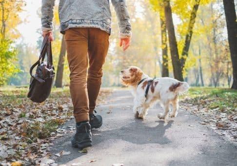 Pour certains maîtres, promener son chien n'est pas forcément de tout repos, ils doivent faire preuve de force que ce soit avec ou sans laisse. Pourtant, avec des méthodes naturelles vous pouvez parfaitement promener votre compagnon à quattre pattes en toutes sécurité.