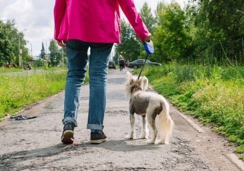 Que dit la loi et la législation à propos des chiens qui se promène en laisse ? Il est essentiel pour un maître de connaître toutes les subtilités pour ne pas avoir une drôle de surprise lorsque vous, vous ferez interpellé par un gendarme.