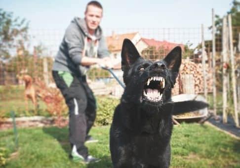 Promener en laisser un chien dangereux de type 1 et 2 demande de prendre certaines précaution. Votre animal de compagnie va devoir porter des accesoirs bien spécifique pour ne pas vous retrouver en mauvaise posture !