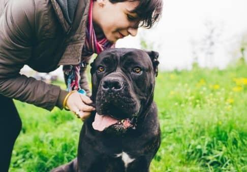 Il n'y a pas de loi qui vous interdit de vous promener avec votre chien en laisse, toute foi, il vous faudra faire preuve de vigilance en rue. Promener son chien peut vous semblez d'une banalité et une démarche tout à fait naturelle comme être un vrai calvaire et un vrai challenge surtout lorsque celui- à décider de tirer sur la laisse comme un fou à cause de nombreux stimuli qui l'entoure. Apprendre à bien tenir son chien vous sera très utile !
