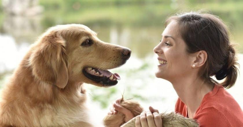 Comment dresser son chien ? Venez découvrir les techniques à utiliser pour y arriver facilement