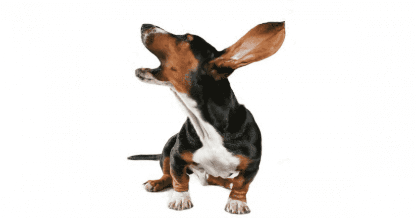 Apprendre à son chien à aboyer chien sur commande 5 astuces faciles qui aidera à votre toutou à japper à volonté !