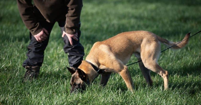 Apprendre à pister à son chien. 5 jeux à faire avec votre fidèle ami canin
