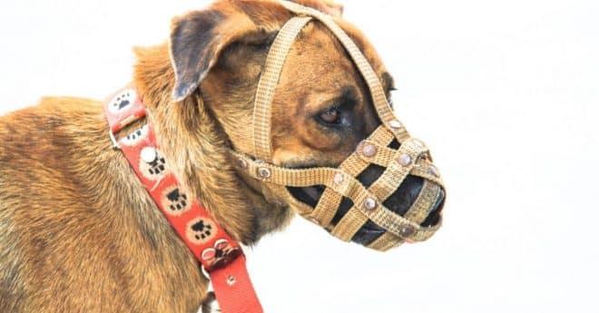 Faire taire un chien pourquoi voulez-vous fermer la gueule à votre animal de compagnie ?