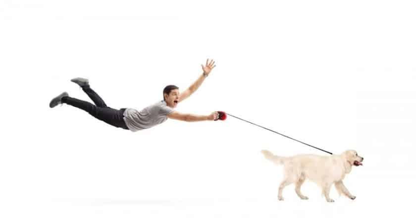 Comment calmer son chien en promenade? Promener son fidèle compagnon à quatre pattes n'a pas toujours était la joie pour vous. À chaque sortie c'est la panique qui vous gagne. Ce n'est pas entièrement votre faute. C'est votre fidèle ami canin qui ne peut pas s'empêcher de sauter partout avant chaque balade. Ce moment est devenu un vrai cauchemar pour vous, mais maintenant c'est terminer, cliquez ici pour découvrir 3 conseils qui vont résoudre tous vos problèmes !
