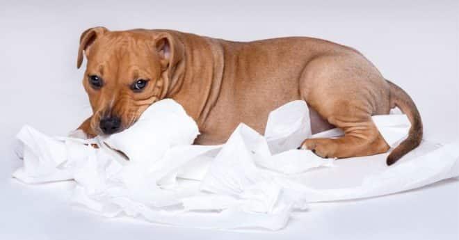 Rendre un chien propre a la maison, 5 astuces qui vous permettront de rendre très vite votre animal de compagnie propre